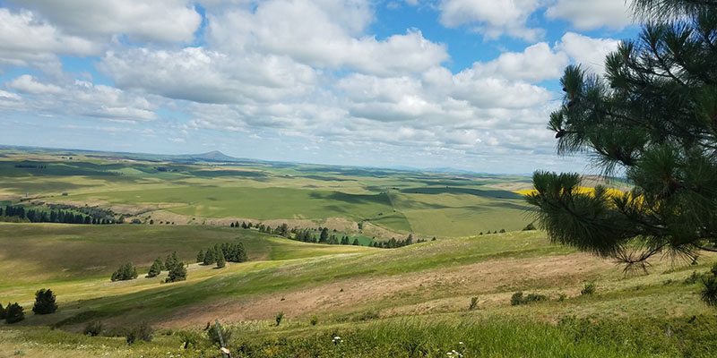 Learn More About Our Palouse Prairie Work!